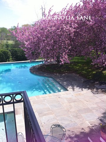 Someday I plan to design my pool around a gorgeous flowering tree, too. Stunning!