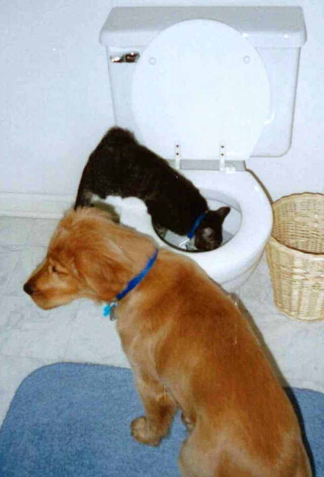tinker-maddie-toilet