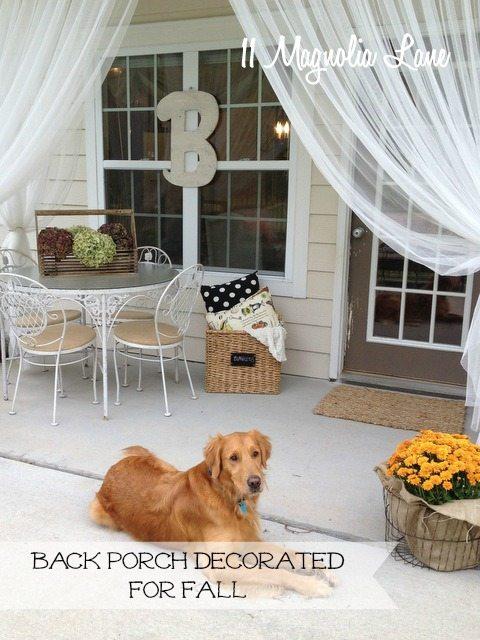 dog-on-back-porch-marked