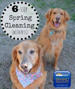 Six-Step Spring Cleaning {With Pets}