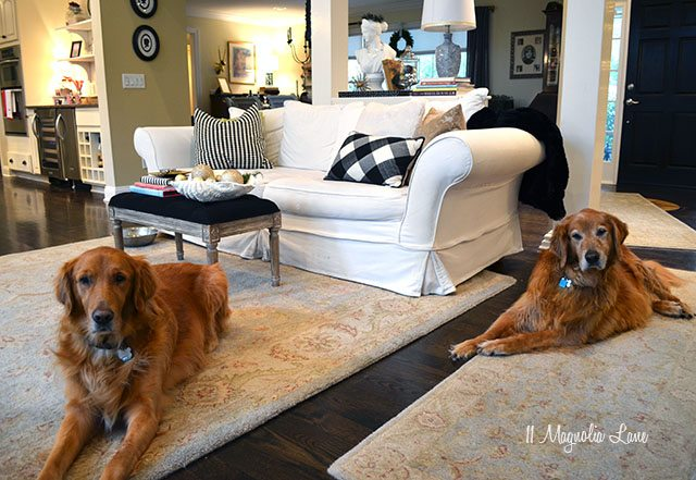 Dogs in Christmas living room | 11 Magnolia Lane