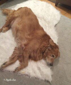 Sunny sheepskin rug