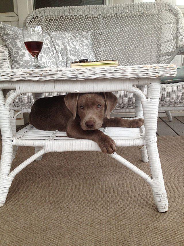 lucy-puppy-porch