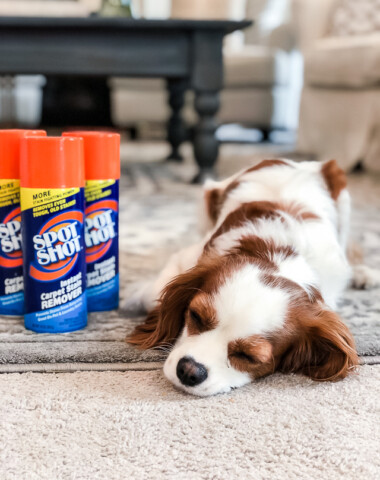 cleaning carpets with pets